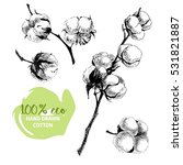 vector hand drawn set of cotton ... | Shutterstock .eps vector #531821887