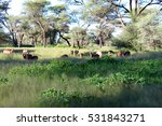 namibian safari game lodge | Shutterstock . vector #531843271