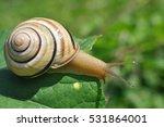 A Snail In The Rain  Snail In...