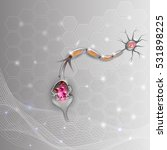 neuron  nerve cell that is the... | Shutterstock . vector #531898225