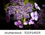 vintage old flower backgrounds  ...   Shutterstock . vector #531914029