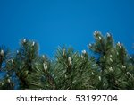 pine branches against the blue... | Shutterstock . vector #53192704