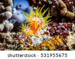 Underwater Life  Fish Underwater