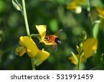 insect and flowers