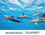 dolphins in the sea   Shutterstock . vector #53199907