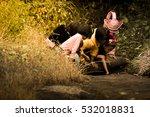 phetchabun  thailand  december  ...   Shutterstock . vector #532018831