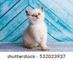 Stock photo kitten scottish straight 532023937