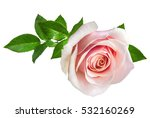 Stock photo rose isolated on the white background 532160269