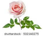 rose isolated on the white... | Shutterstock . vector #532160275