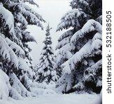Winter Snow Fir Tree Forest...