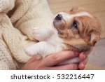 Stock photo small puppy looking up while woman holding cute dog little pet taking rest at cozy home owner 532216447