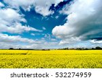 Rapeseed Fields  England