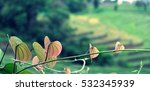 beautiful leave heart shaped... | Shutterstock . vector #532345939