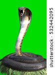 3d King Cobra The World's...