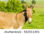 Donkey Portrait Donkey Animal...