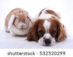 true animal friends. real dog... | Shutterstock . vector #532520299