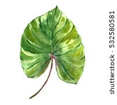 watercolor tropical leaf. | Shutterstock . vector #532580581