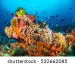 Colourful Corals In Anilao  ...
