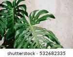 monstera leaves against a white ... | Shutterstock . vector #532682335