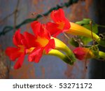Bright Red Trumpet Flowers Wit...