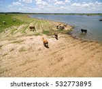 aerial view herd of cows at... | Shutterstock . vector #532773895