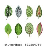 exotic tropical leaves isolated ... | Shutterstock .eps vector #532804759