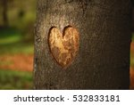 Heart Carved On A Tree In...