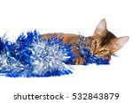 Small photo of funny Abyssinian Kitten plays with a blue tinsel on a white background, kitty tangled in trumpery, cat with yellow eyes