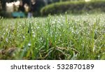 Morning Grass Dew
