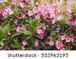 flowers   Shutterstock . vector #532963195