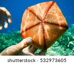Orange Pentagons Starfish   It...