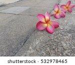 pink plumeria flower on the... | Shutterstock . vector #532978465