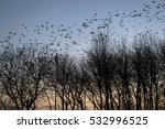 Flock Of Birds On Blue Sky And...