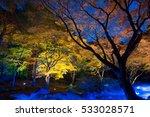 night view of maple  in japan | Shutterstock . vector #533028571