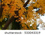 autumn color in japan | Shutterstock . vector #533043319