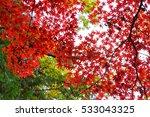 autumn color in japan | Shutterstock . vector #533043325