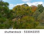pine in japanese garden | Shutterstock . vector #533043355