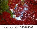 autumn color in japan | Shutterstock . vector #533043361
