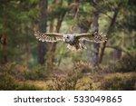 Tawny Owl  Strix Aluco  Flayin...