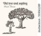 trees. hand drawn vintage... | Shutterstock .eps vector #533061289