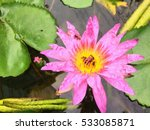 Illustrate Of Violet Lotus Or...