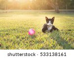 Stock photo cute cat sitting on green grass with sun light effect 533138161