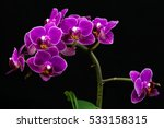 close up of pink orchid flowers.... | Shutterstock . vector #533158315