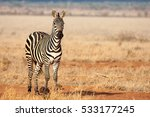 one zebra is standing in the... | Shutterstock . vector #533177245