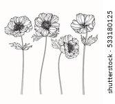 drawing anemone flower on white ... | Shutterstock .eps vector #533180125