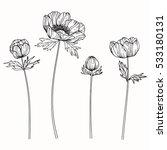 drawing anemone flower on white ... | Shutterstock .eps vector #533180131
