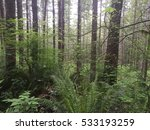 dense forest view from the... | Shutterstock . vector #533193259