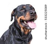 Stock photo happy curious dog isolated on white background 533225089