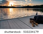 a black golden retriever and... | Shutterstock . vector #533234179