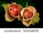 close up of pastel rose flowers.... | Shutterstock . vector #533238295